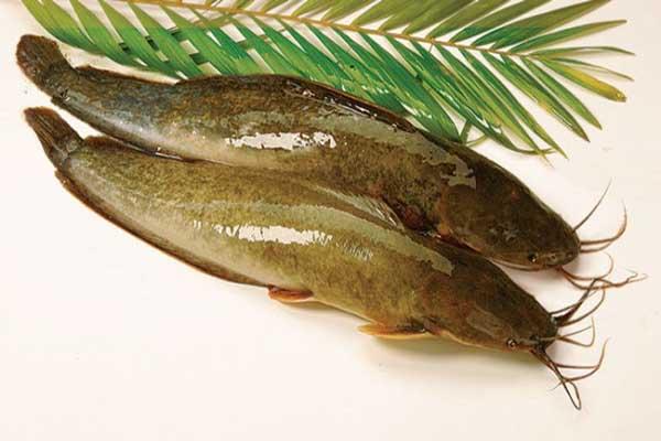 Cách chế biến cá trê lai sạch nhớt, hết tanh